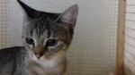 Les chats à parrainer