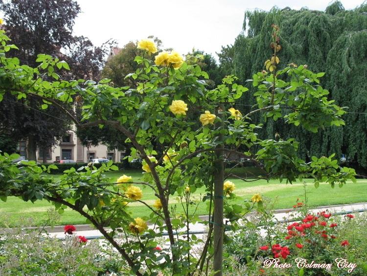 Colmar : Espaces verts