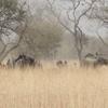 Bénin Parc de la Pendjari Elephants