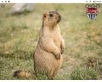 Et  les marmottes !!