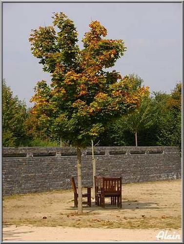 L_automne__04