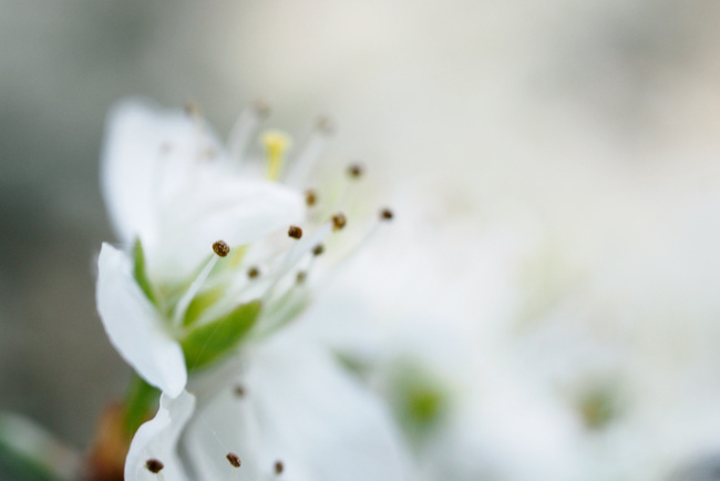 partage photos du mois d'avril