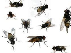 97 : L'homme qui détestait les mouches