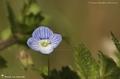 Fleurs à dominante bleue