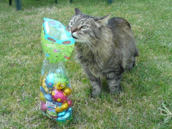 chat perte de poids polyuro polydipsie irc
