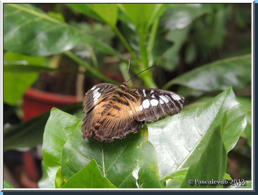 Le Paradis des Papillons à Sanguinet - 1/9