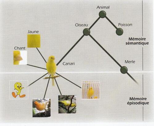Apprendre en casse (4) : former et utiliser notre mémoire.