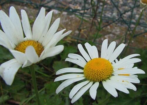 mon jardin en fin d'été