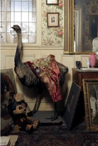 Appartement de Madame de Florian  : autruche