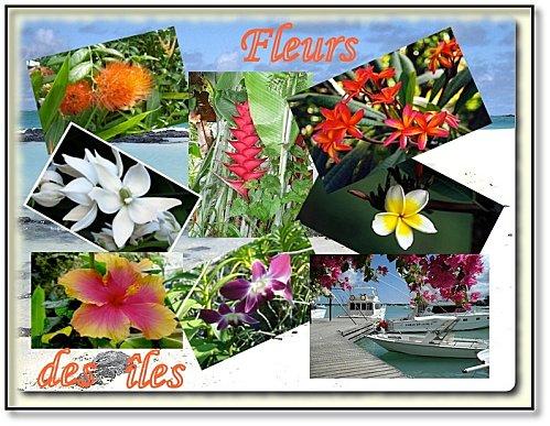 montage-fleurs-des-iles.jpg