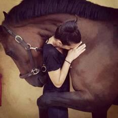 Message de Coco le cheval, aux Humains les bipèdes;