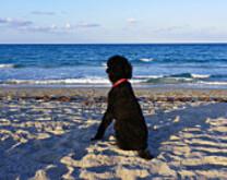 Journée a la plage