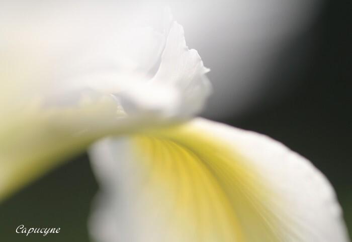 iris 6159