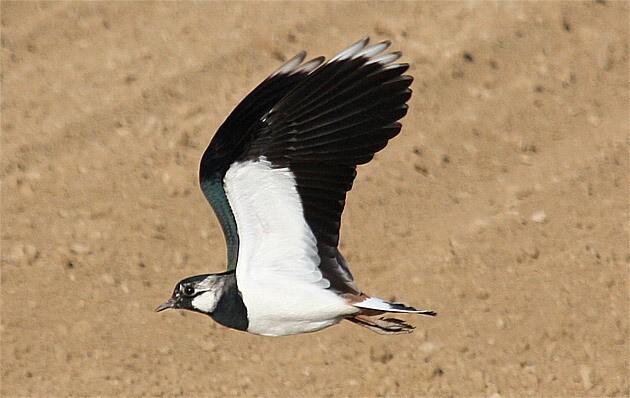 oiseau180410-05[1]