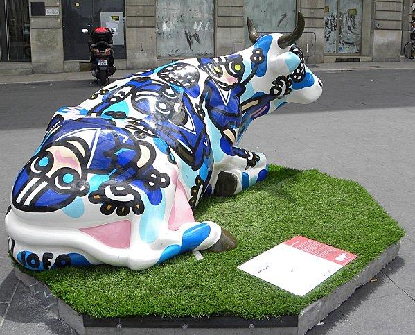 cow51