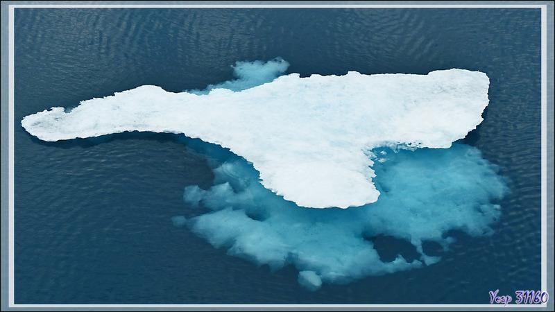 Toujours à la recherche d'un glaçon pour débarquer - Mer de Beaufort - Nunavut - Canada