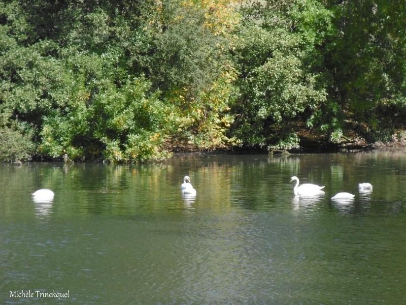 Une balade autour du Lac d'ORTHEZ (64), le 3 octobre (suite n° 2)...