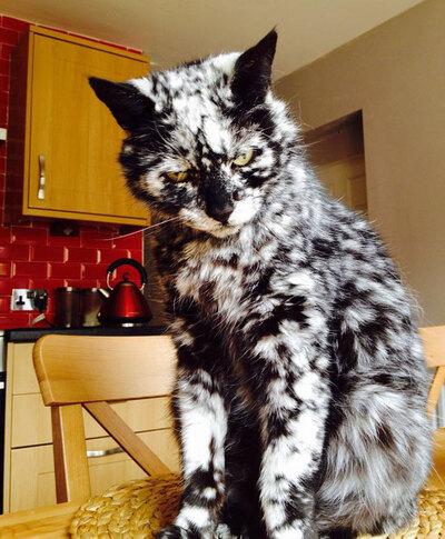 20 chats et chiens atteints de vitiligo au pelage magnifique