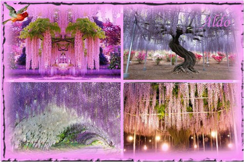 PPS Kawachi Fuji Garden
