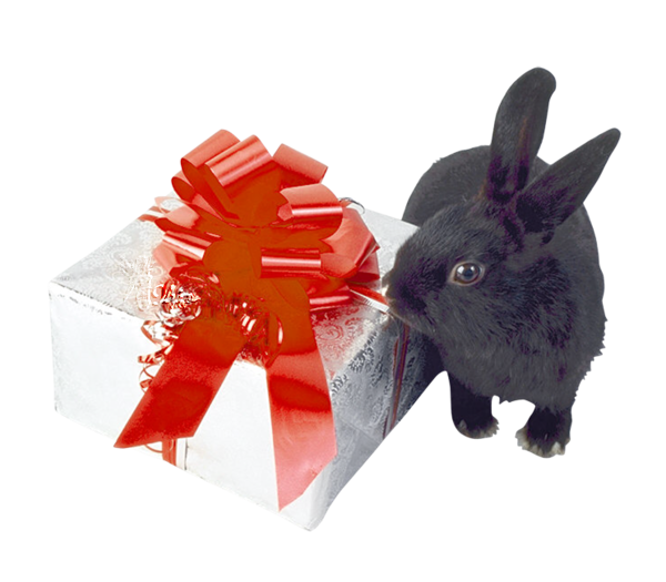 Tubes animaux Noël 6