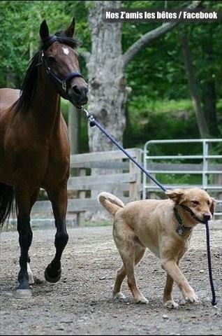 chien-cheval.jpg