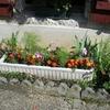 fleurs chacra.jpg4.jpg