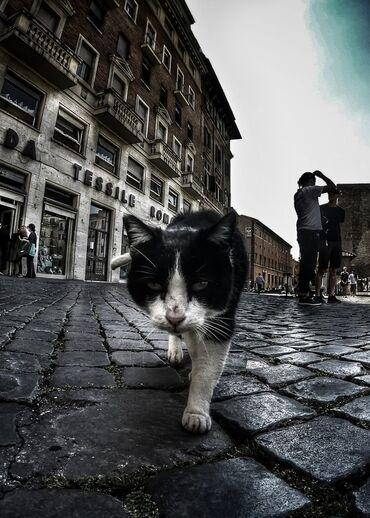 12 - Des chats dans la rue encore