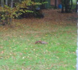 chailly-octobre-2007-075-bis.jpg