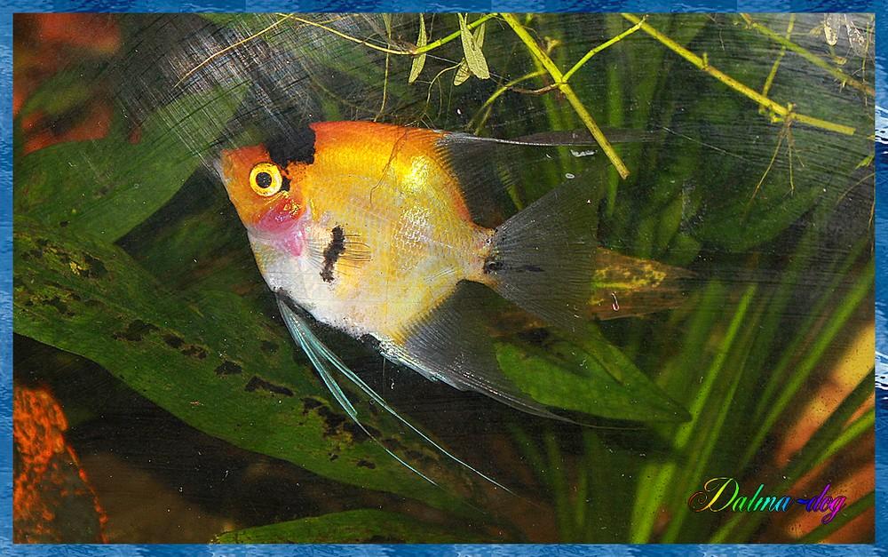 les poissons de mon ami Vincent