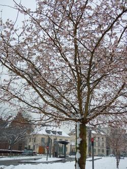 Tolkyo comme Douai, sous la neige