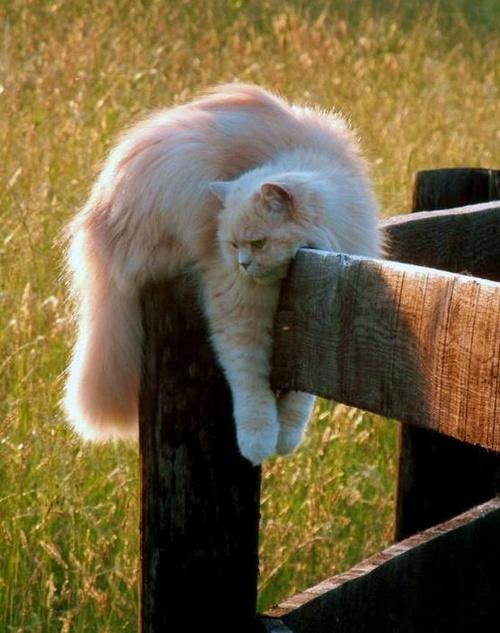 Images de chats.
