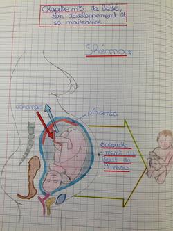 Les 4èmes illustrent la grossesse !