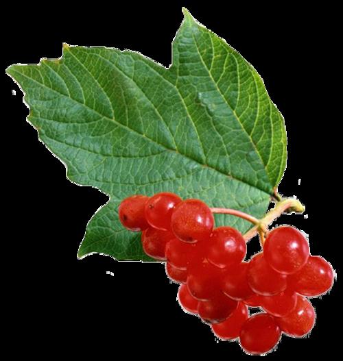 Fruits /9