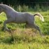 superficie de pâture pour le cheval.jpg
