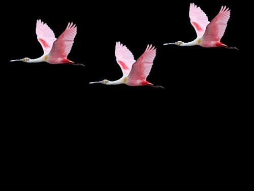 Avatar série 3  Les Oiseaux