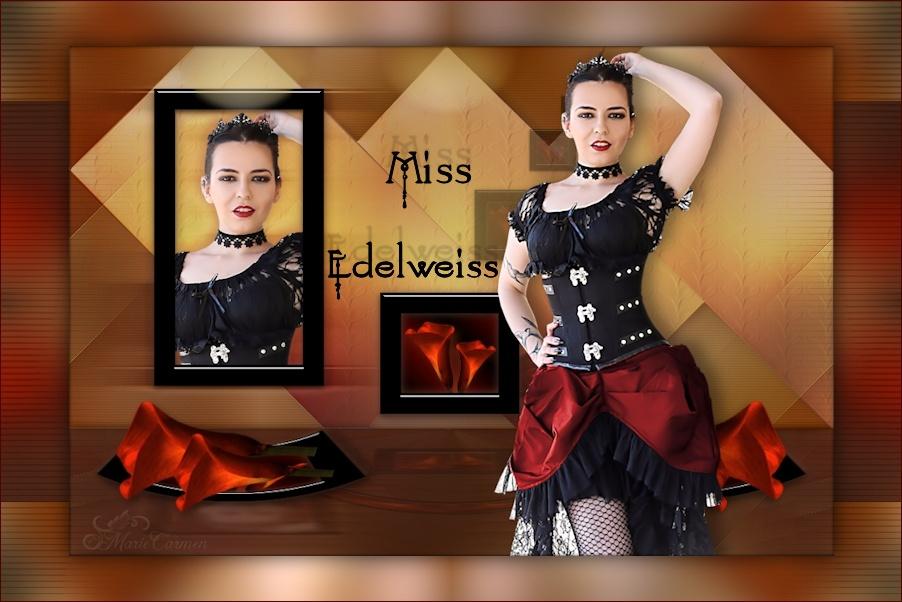 ♥ Tags Les Miss Ici ♥