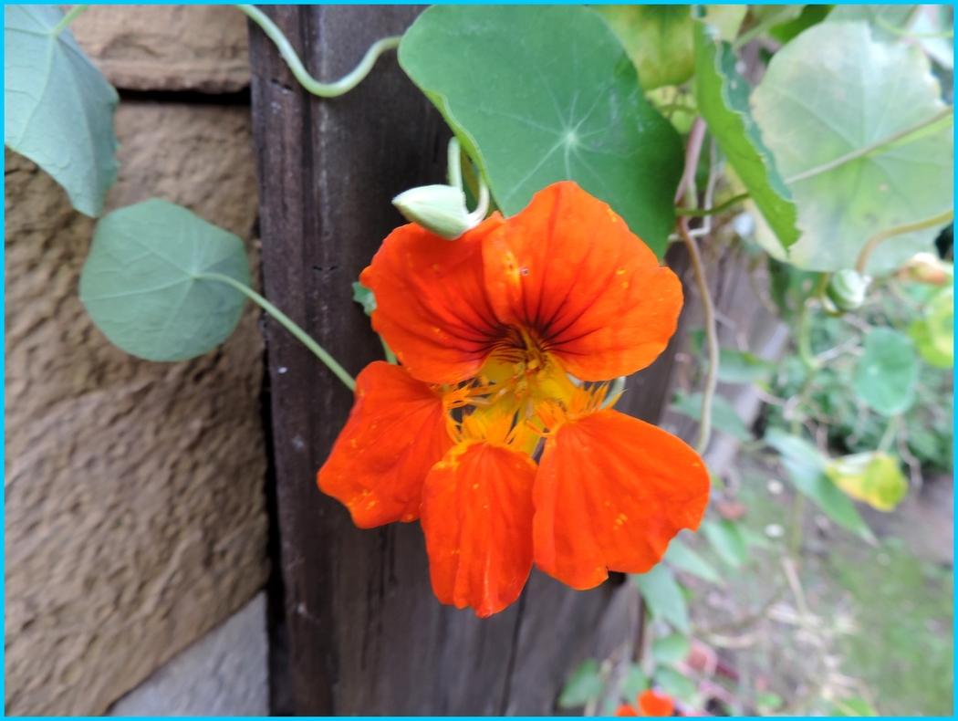 une fleur en macro