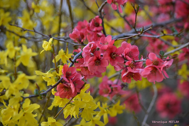 Rambouillet : Dès que le printemps revient (3)
