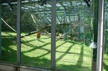 Zoo Neunkirchen 2012 038