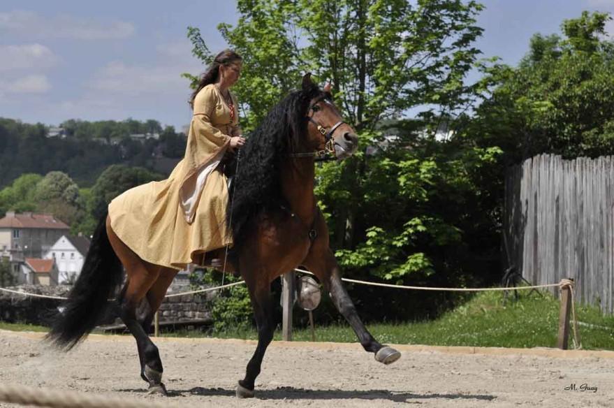 cheval-cavaliere-3817.jpg