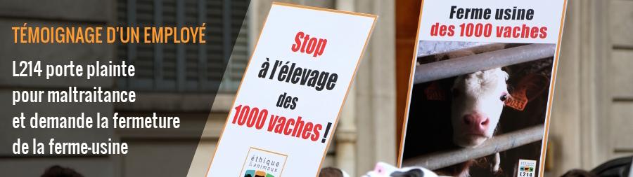 temoignage-employe-1000-vaches-900