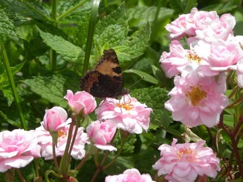 Un beau papillon
