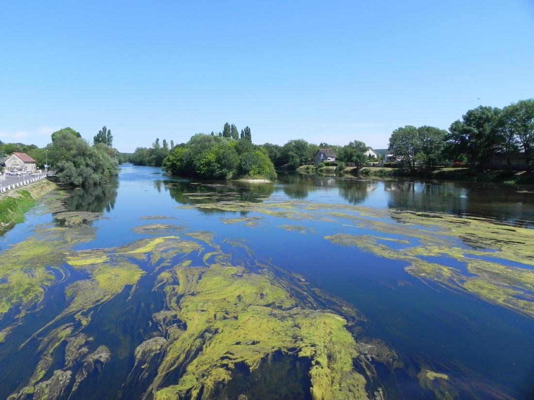Décor naturel sur la rivière