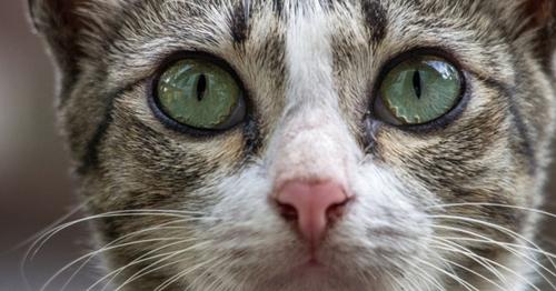Comment votre chat voit-il ?