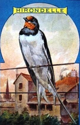 Le-Petit-Livre-des-Oiseaux-7.JPG