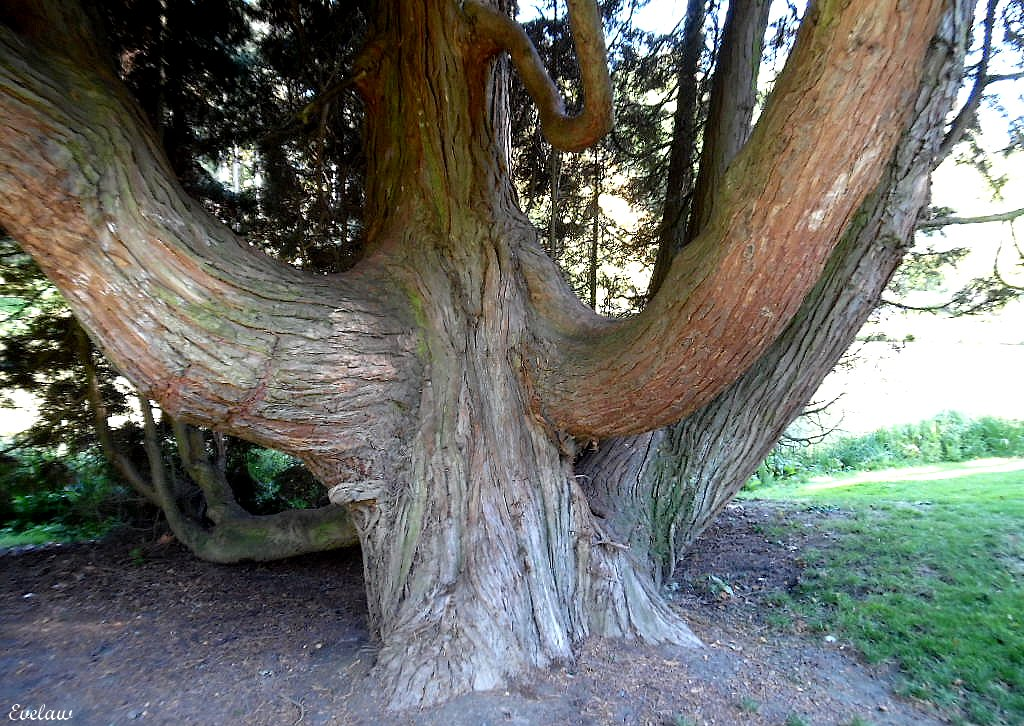 PROMENADES AU PARC  BARBIEUX  EN TOUTES SAISONS - 4 - La Faune et quelques arbres remarquables