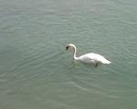 Entre nous...la rivière...Court métrage M.N.E.1...Romans sur Isère 26...