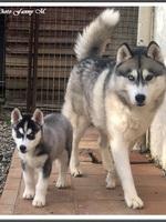 Ritscka (2 mois, chez ses nouveaux propriétaires)