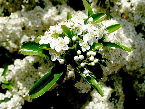 fleurs1.06-199.JPG