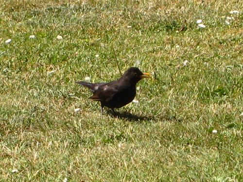 Défi de juillet : un oiseau